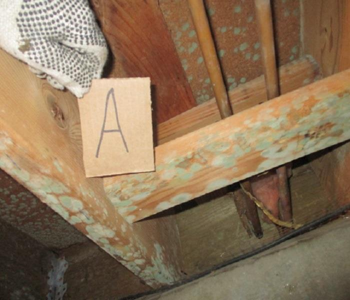 Crawl Space Mold Before